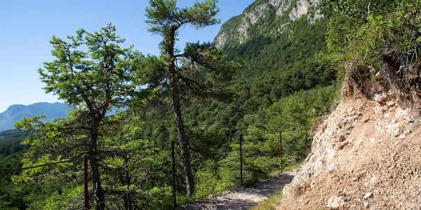 Il Lez Sentiero Margherita passeggiate in piano in Val di Non Trentino