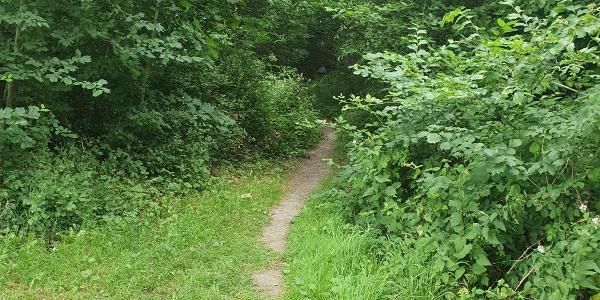 Der erste Trail wartet schon auf uns