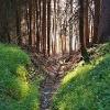 Dirauls-Trail zwischen Feldis und dem Domleschg