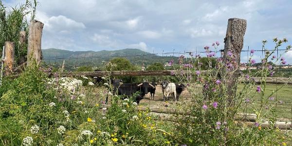 Irrigating Cova da Beira - Vale Formoso > Borralheira - GRZ: Stage 2