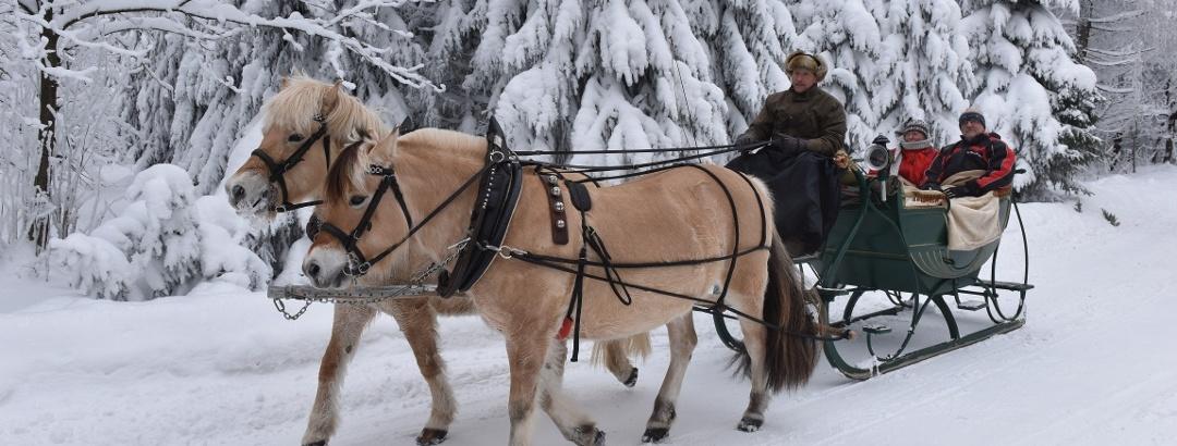 Pferdeschlittenfahrten Liebscher