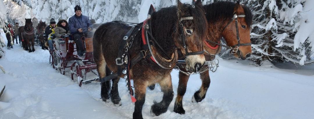 Pferdeschlittenfahrten in der Urlaubsregion Altenberg