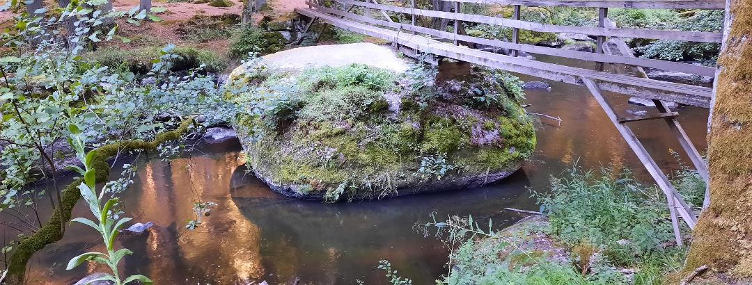 Im Waldnaabtal spiegelt sich das Wasser morgens goldfarben.
