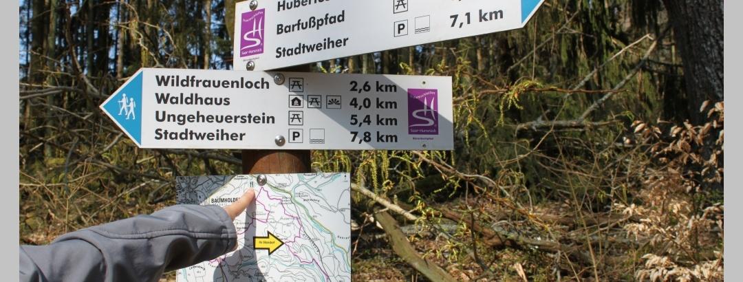 Schilderbaum auf der Traumschleife Bärenbachpfad im Stadtwald Baumholder