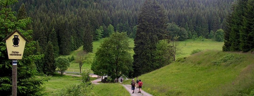 On the ridge trail (Kammweg) Ore Mountains-Vogtland, descent from Auersberg