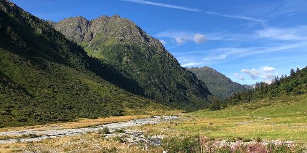 Alp Sardasca