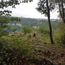 Im Hintergrund die Burg Hohen Wittlingen