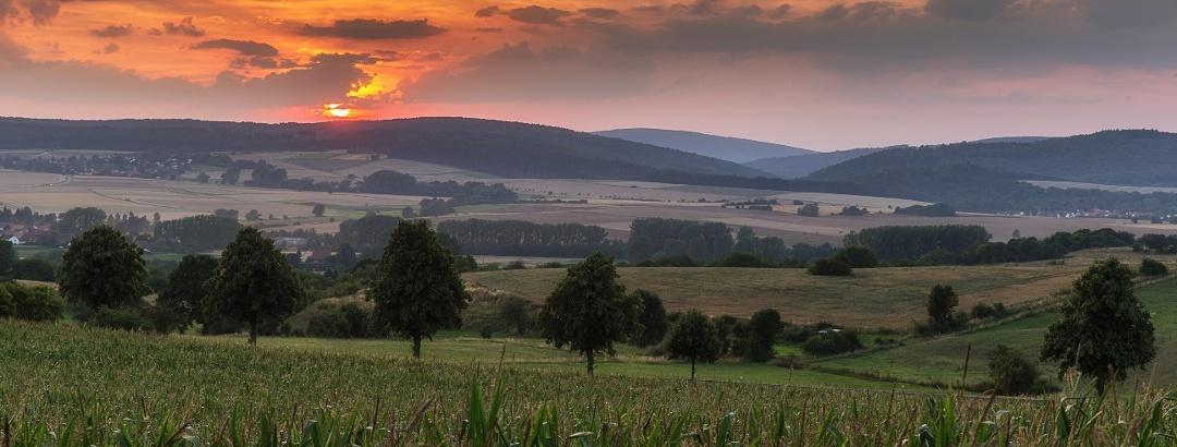 Blick auf den Bramwald in der Abendsonne