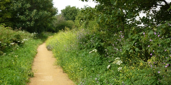 Wild flowers along the Wandle Trail