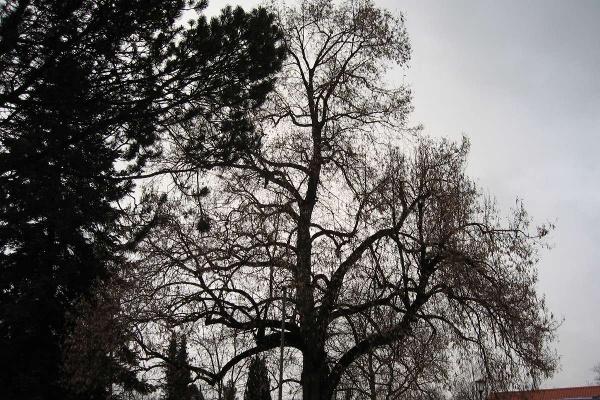 Im Schatten eines Baumes Attel