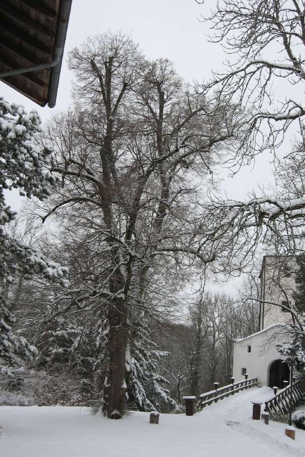Prügellinde Schloss Amerang