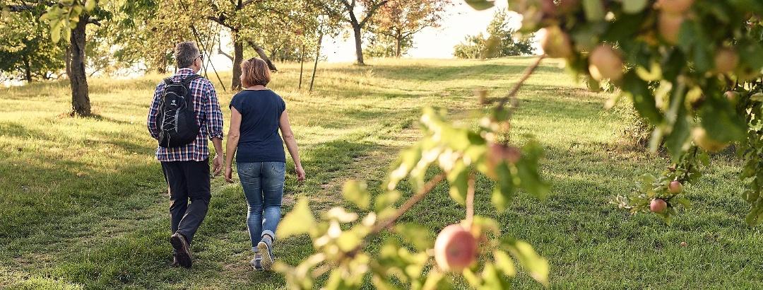 Die Streuobstwiesen am Früchtetrauf haben zu jeder Jahreszeit etwas zu bieten.