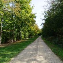 Waldwirtschaftsweg