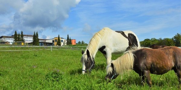 Ponys vorm Elldus