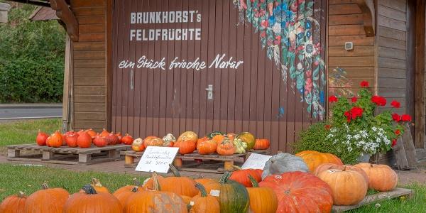 Brunkhorst