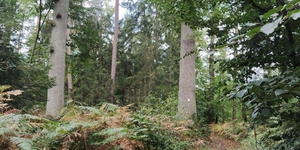 la balade en forêt