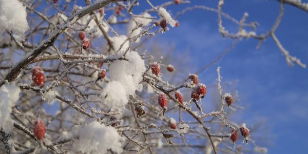 Winter in der Region