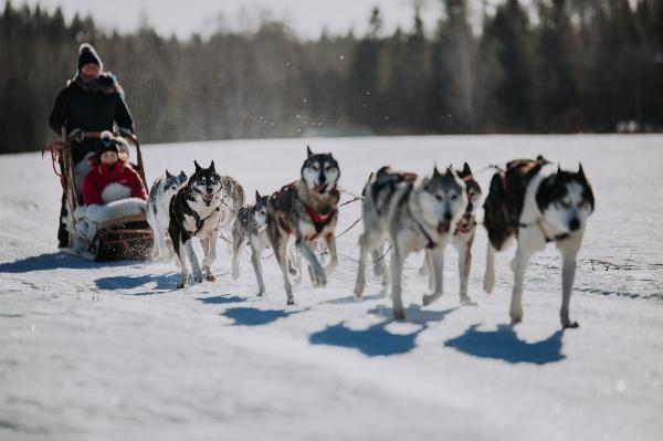 Husky-Safari durch Finnland