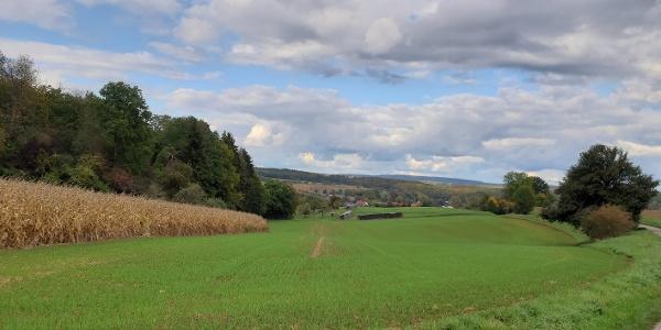 Radweg zwischen Zuzenhausen und Eschelbronn