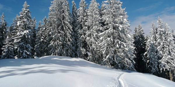 Hochmoor Rothenthurm im Schnee