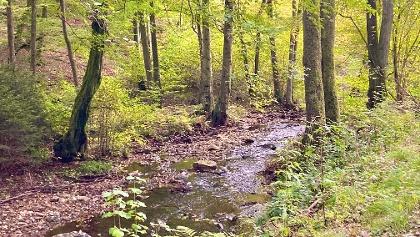Die Riveris auf ihrem Weg in die Talsperre