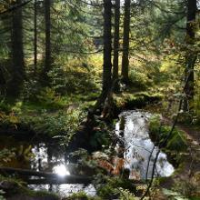 Im Waldmmor