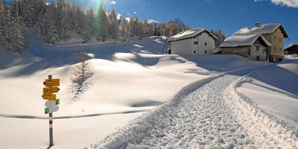 Maloja Cresta, Engadin, Graubünden, Schweiz