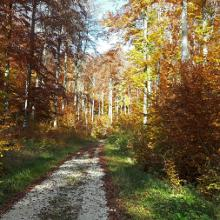 Südwind - Waldweg
