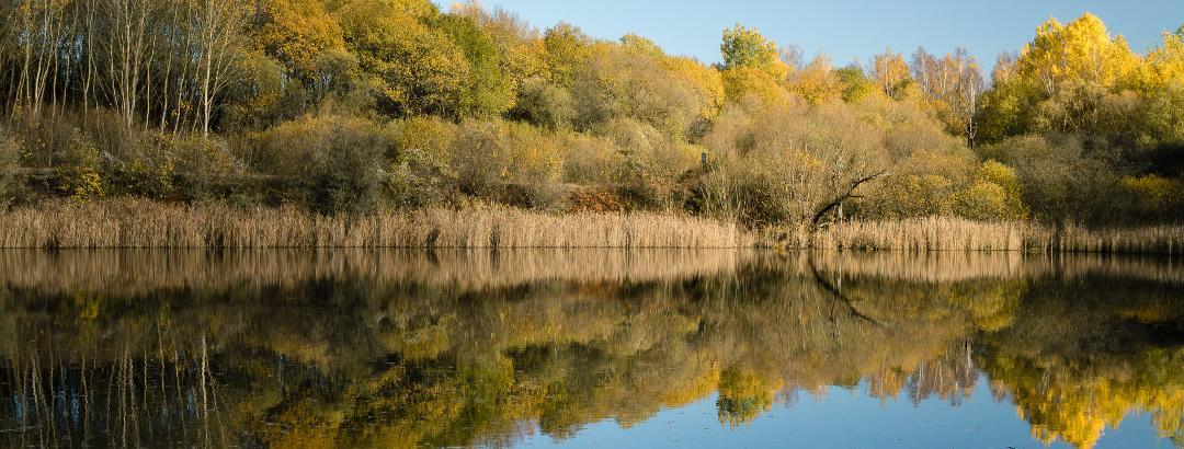 Am Pontel-Teich