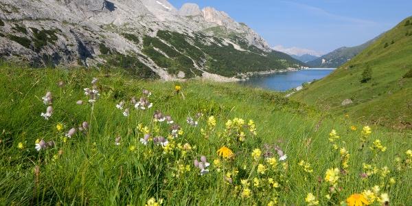 Marmolada - Passo Fedaia