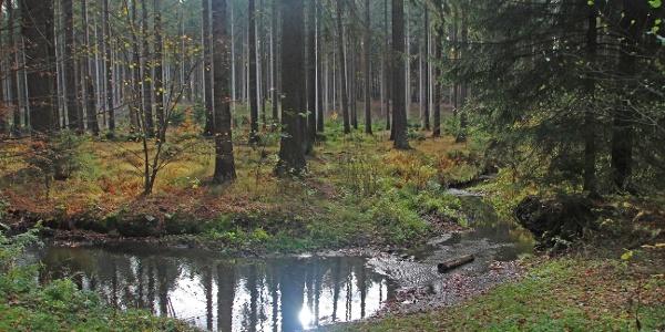 Zellwald