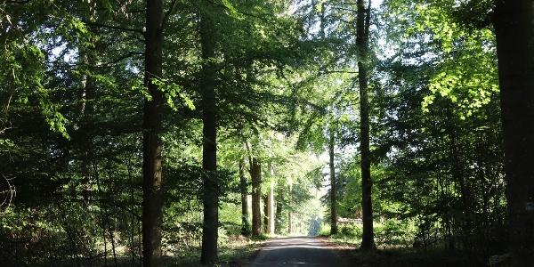 Weg durch den Wald bei Kürrenberg