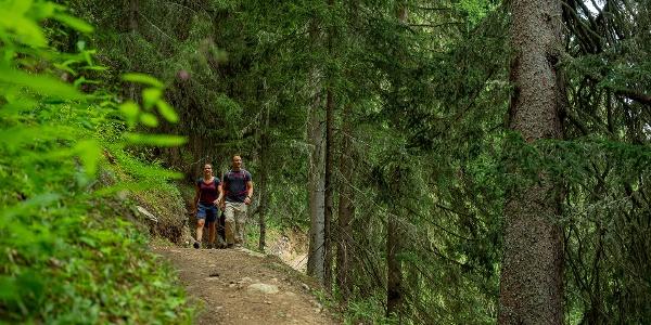 Randonnées dans la forêt de montagne