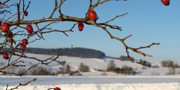 Winterlandschaft bei HInterhermsdorf