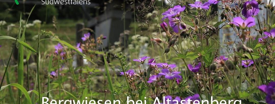 Bergwiesen bei Altastenberg - Naturschätze Südwestfalens