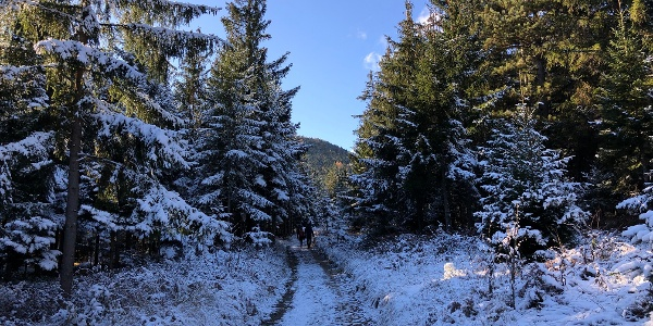 Im Wald vorerst auf Forstwegen gemächlich bergan