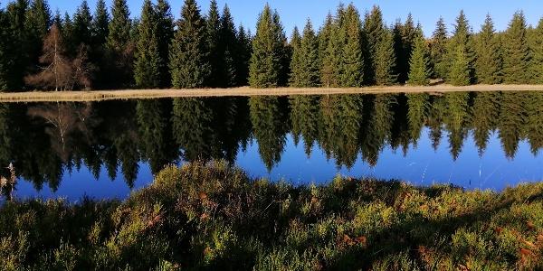Wüster Teich