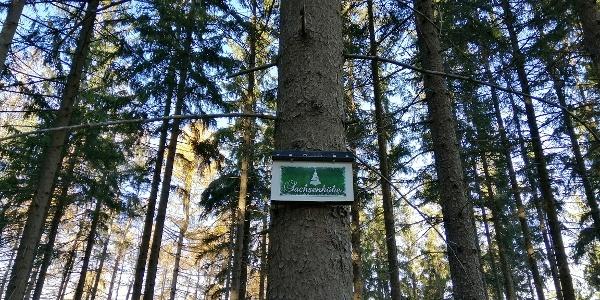 Dicht bewaldete Sachsenhöhe
