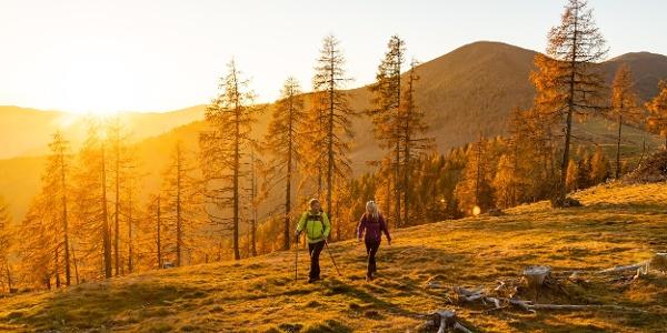 Goldenes Licht! Im Herbst entfaltet der Nockberge-Trail seine ganze Magie.