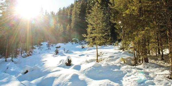 Romantisch führt der Weg entlang des Zauchbachs durch das eingeschnittene Tal
