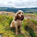 Foto do perfil de lamby nicky