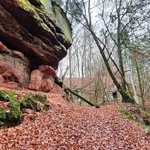 Vor dem Bergauf-Abschnitt hier ebenfalls diese schöne Fels- und Waldnatur