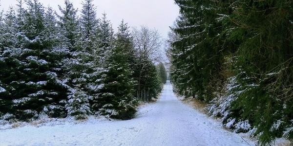Winterwanderweg zur Tellkoppe - Langer Weg