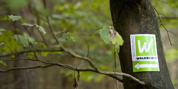 Sauerland-Waldroute: Weißes W auf grünem Grund
