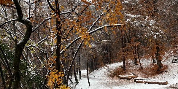 Start of the Friedensweg trail (path of peace), Caldaro sulla strada del vino_winter