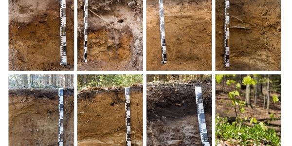 Bodenprofile rund um den Gohrisch