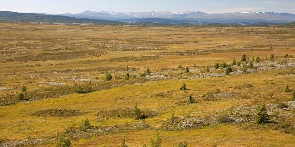Gamlestølberget in Kjølaåne nature reserve