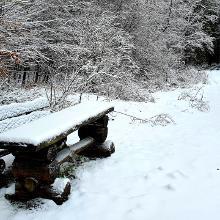 Am Waldrand beim Bambergerhof