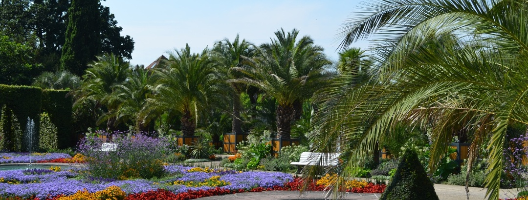 Palmengarten Kurpark