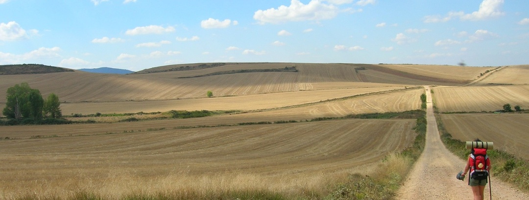 Abschnitt des Jakobswegs zwischen Getreidefeldern